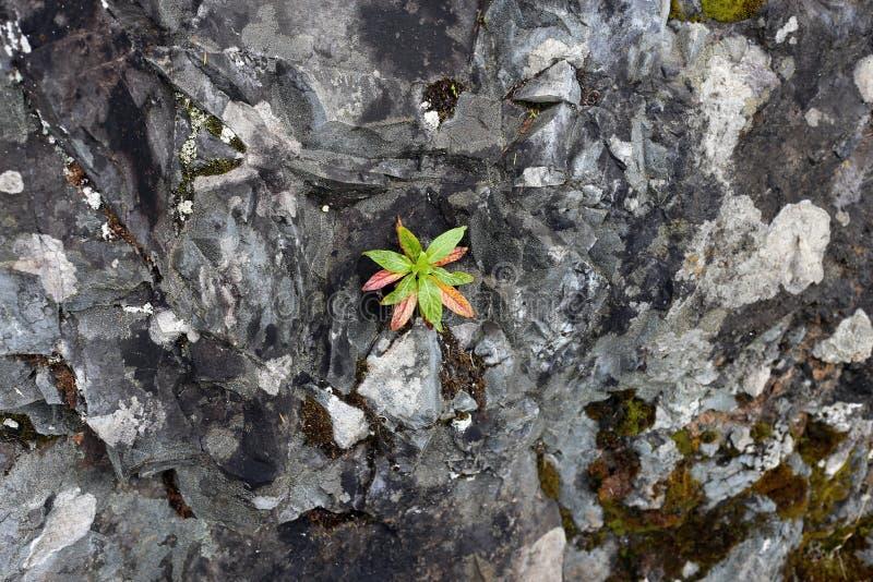 Rewolucjonistki & zieleni rośliny Mały dorośnięcie od Kolorowej skały zdjęcia royalty free
