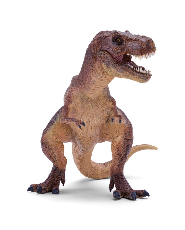 Rex de T photo libre de droits