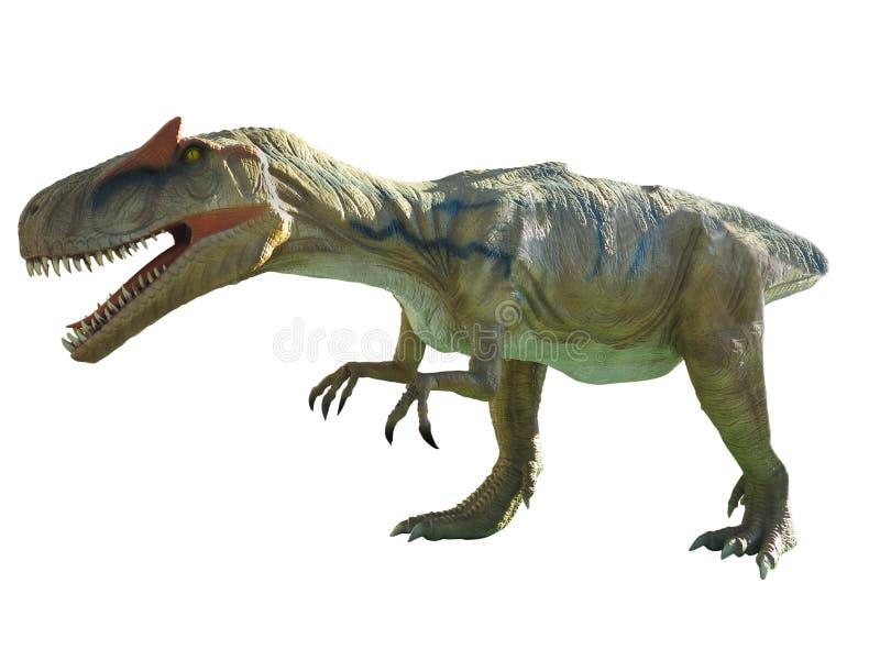 Rex de tyrannosaure de dinosaure d'isolement sur le fond blanc image libre de droits