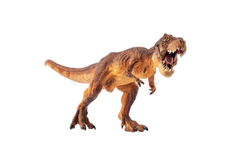 Rex de tyrannosaure, dinosaure sur le fond blanc photos libres de droits