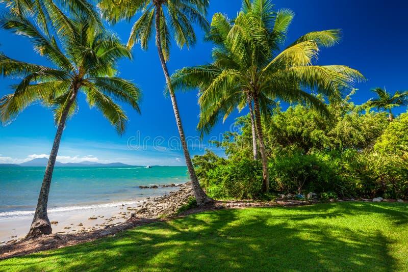Rex Smeal Park i Port Douglas med palmträd och stranden arkivfoton