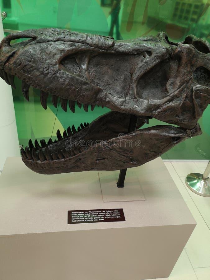 rex t royaltyfri fotografi