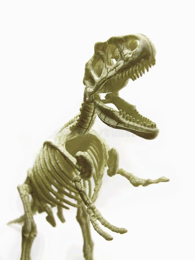 rex t 免版税库存照片