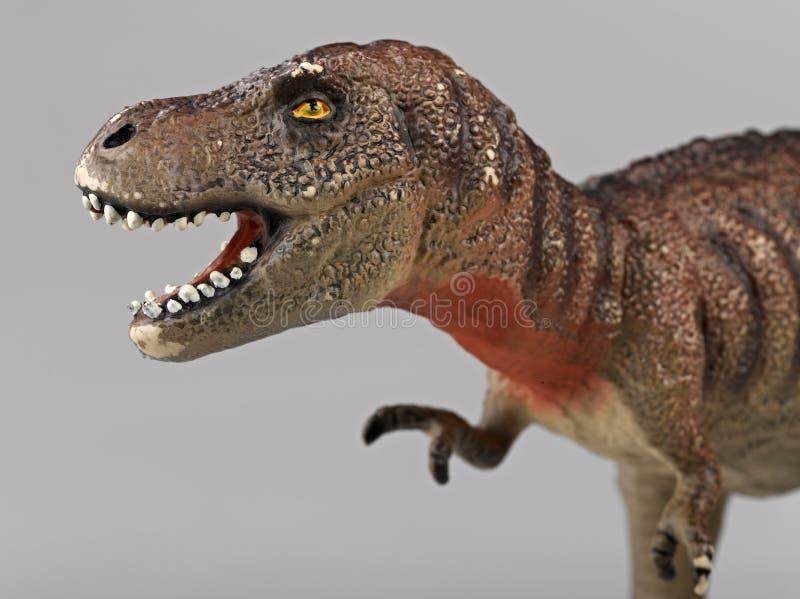 Rex Tyrannosaurus стоковые изображения