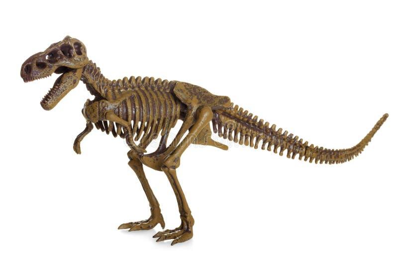 rexskeletttyrannosaurus fotografering för bildbyråer