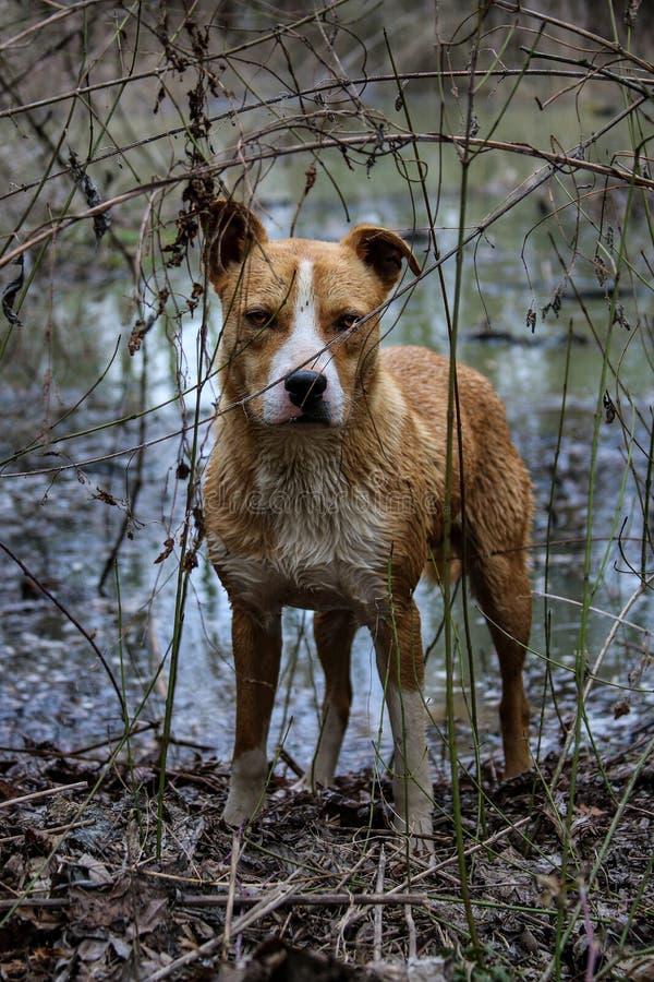 Rey del bosque del pantano foto de archivo libre de regalías