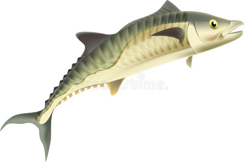 Rey Fish