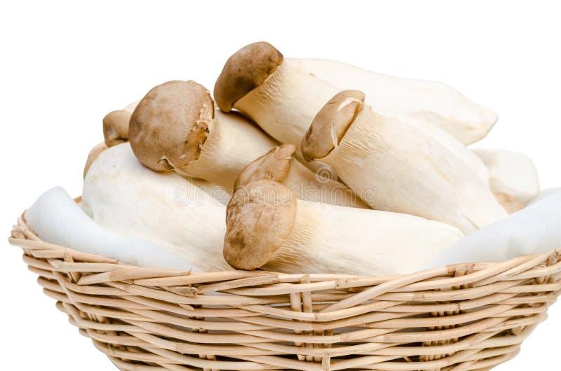 Rey Oyster Mushroom aislado en blanco imagenes de archivo