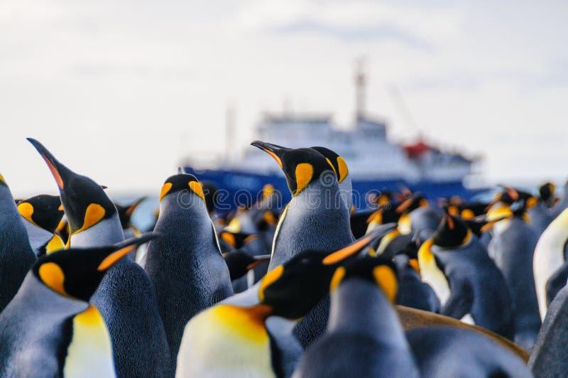 Rey Penguins en puerto del oro foto de archivo