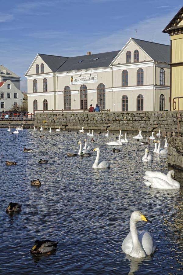 Reykjavik湖 免版税库存图片