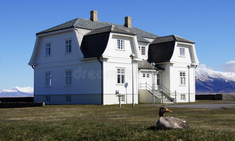 Reykjavik Hofdi hus och gås arkivfoton