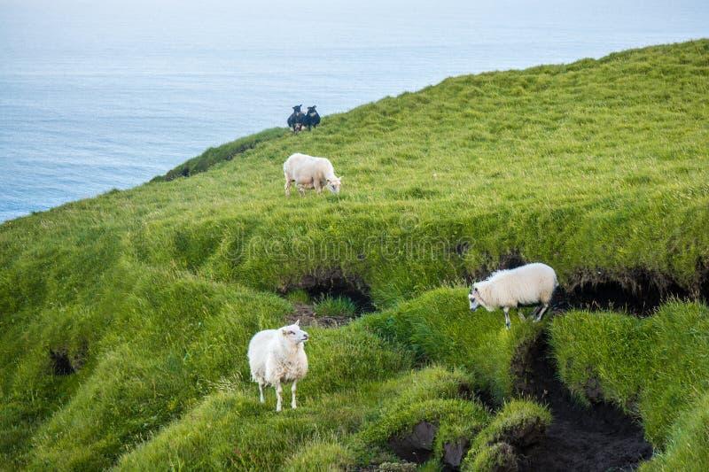 Reynisfjara kust nära byn Vik, Atlantic Ocean, Island arkivfoto