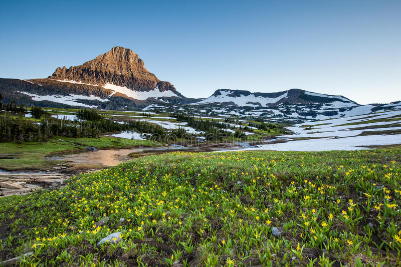 Reynolds Mountain over wildflower field, Glacier National Park. Reynolds Mountain over wildflower field at Logan Pass, Glacier National Park stock photography