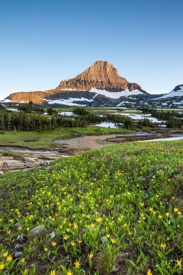 Reynolds Mountain sobre o campo do wildflower em Logan Pass, geleira N fotos de stock royalty free