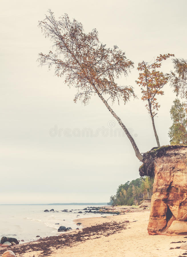 Rezerwat przyrody blisko przy Vidzeme regionem Latvia obrazy stock