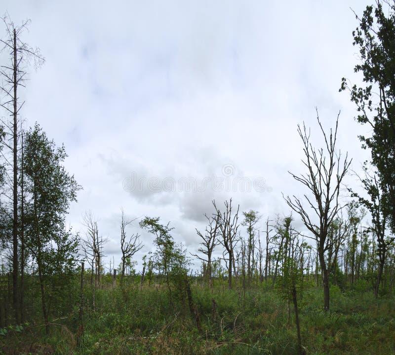 Rezerwat przyrody (siedliska zarządzenie) z imię Moore zwischen Greifswald und Miltzow, zaświecający Mires między Greifswald i Mi obraz stock