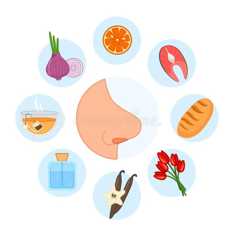 5 ?rganos de sentido olor libre illustration
