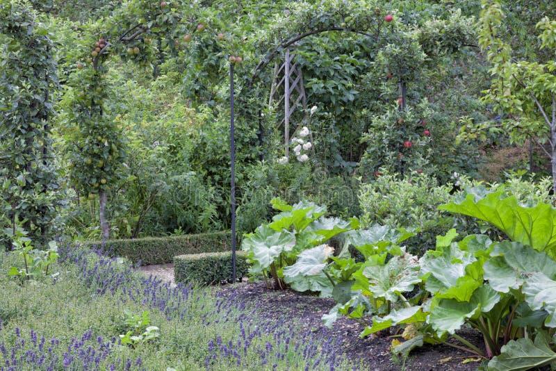 Rhabarber, Lavendel, Apfelbäume in einem Gemüsegarten des Sommers lizenzfreies stockfoto