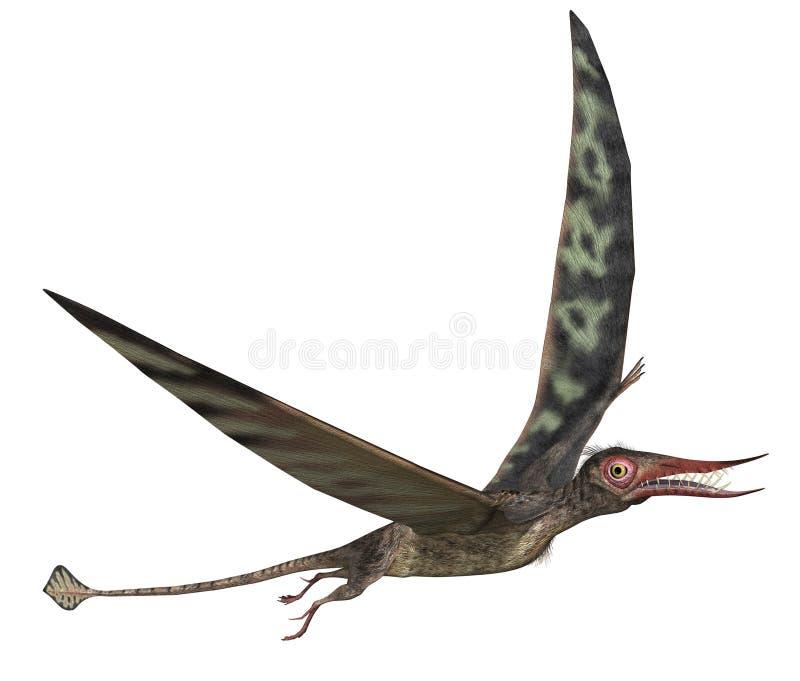 rhamphorhynchus δεινοσαύρων ελεύθερη απεικόνιση δικαιώματος