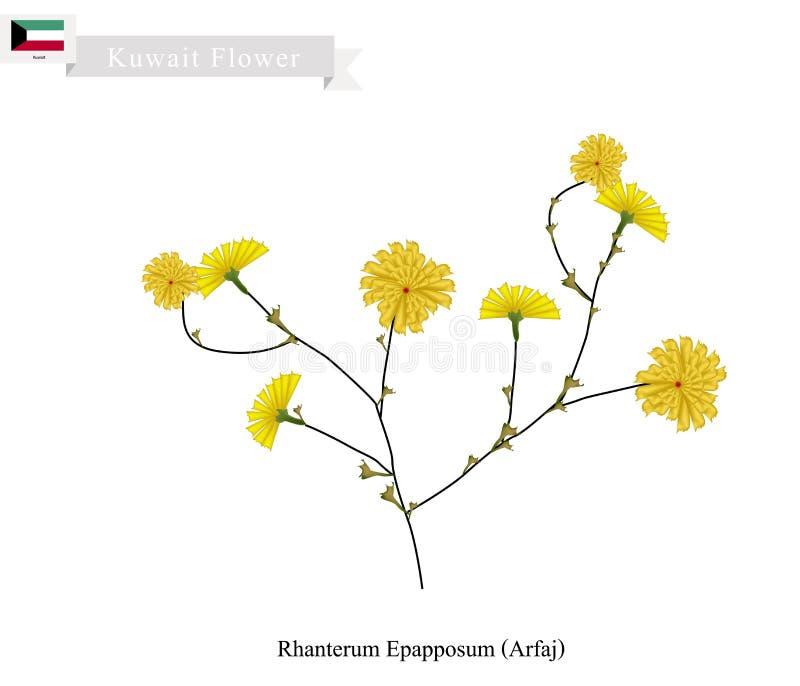 Rhanterum Epapposum, a flor popular de Kuwait ilustração royalty free