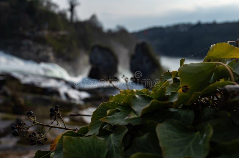 Rheinfalls - Schweiz - bild 3 fotografering för bildbyråer