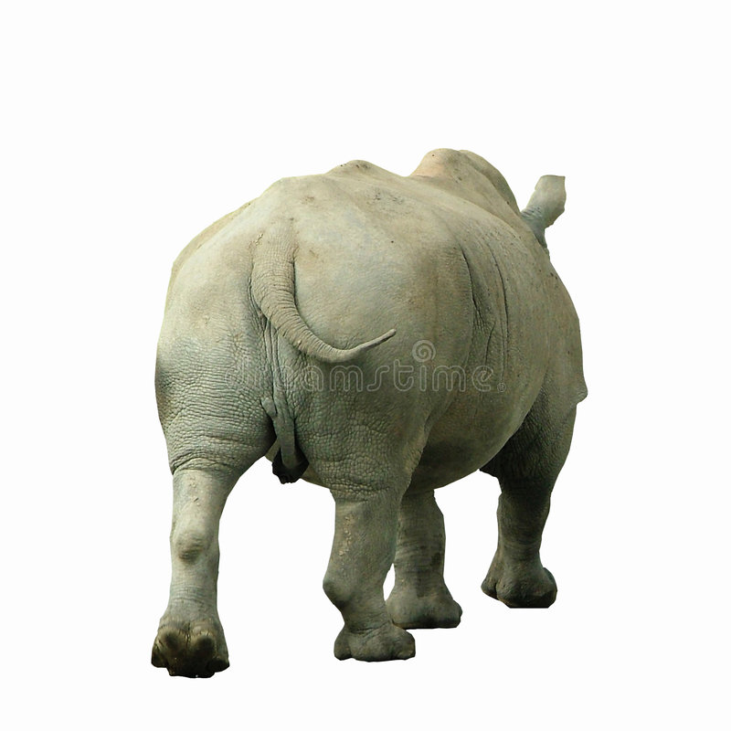 Download Rhino stock image. Image of dangerous, huge, wildlife, fierce - 199871