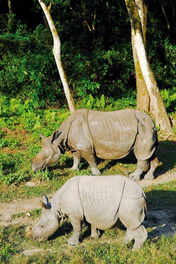 rhino 2 imagem de stock royalty free