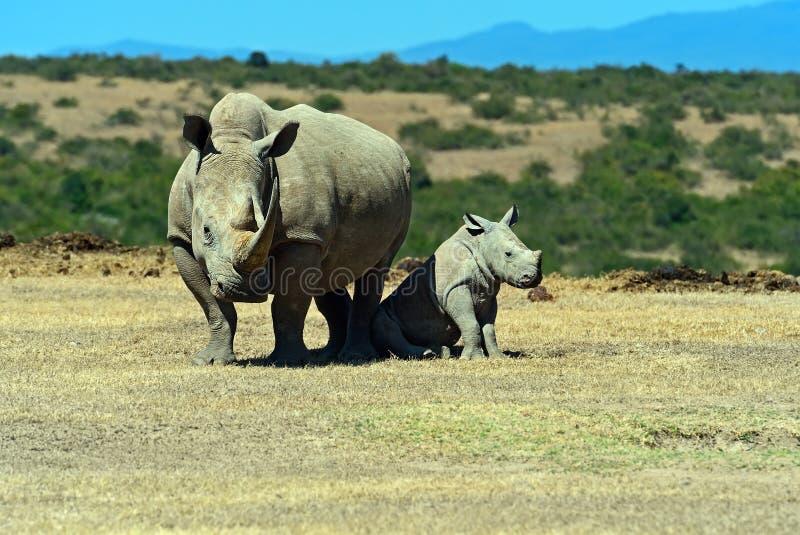 rhino fotos de archivo