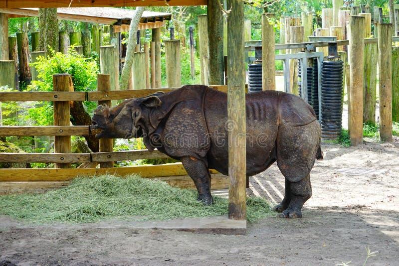 Rhino is eating stock photo