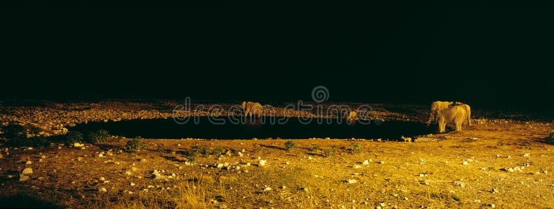 Rhino and elephant near lake stock photo