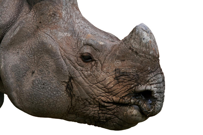 Rhino Face royalty free stock photos