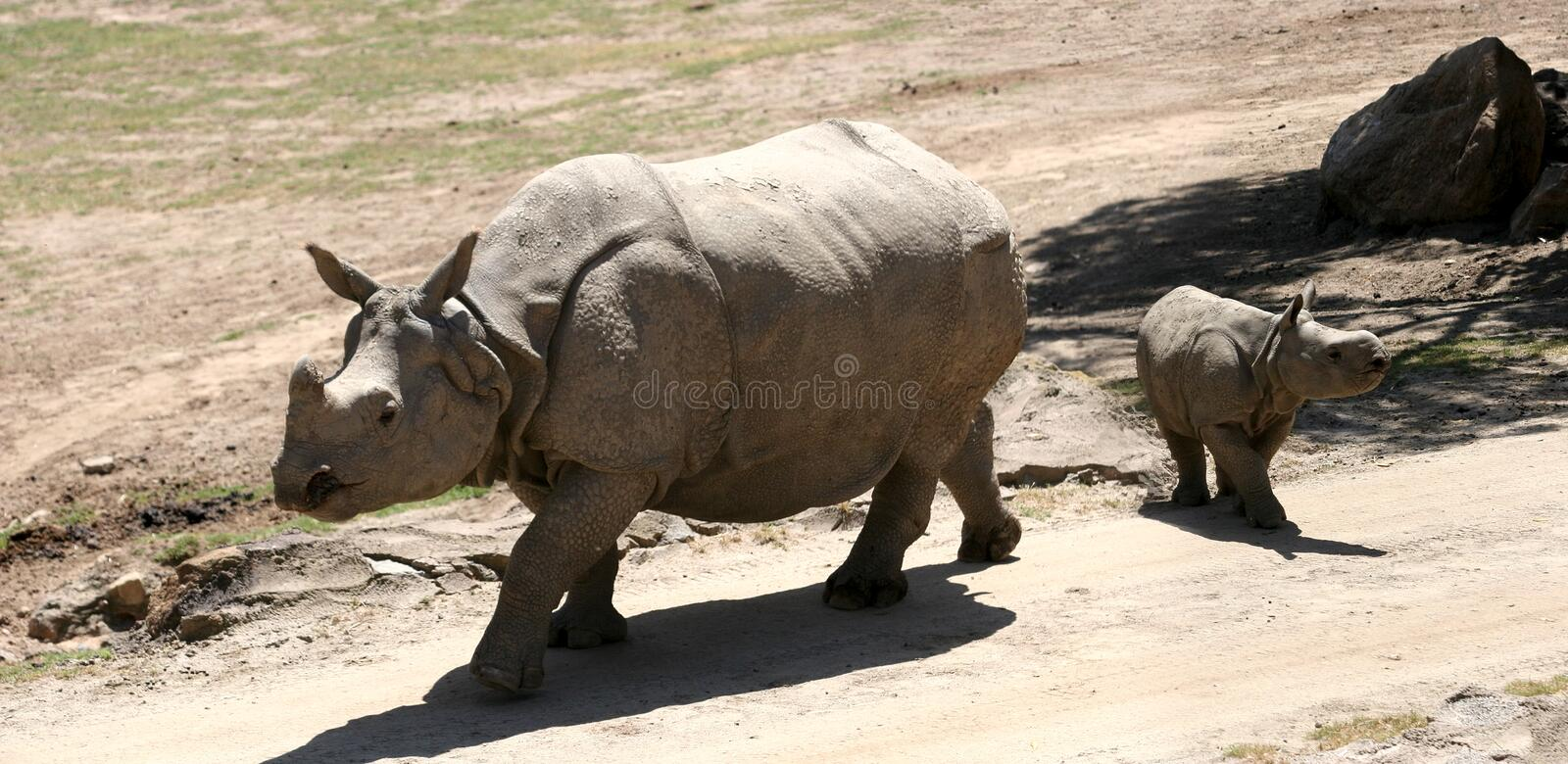Download Rhino family stock photo. Image of gray, extinct, fang - 102460