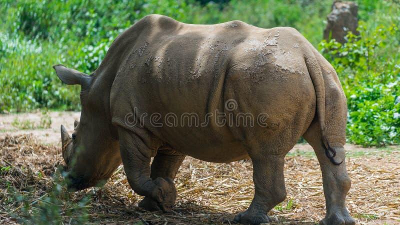 rhino stockfotografie