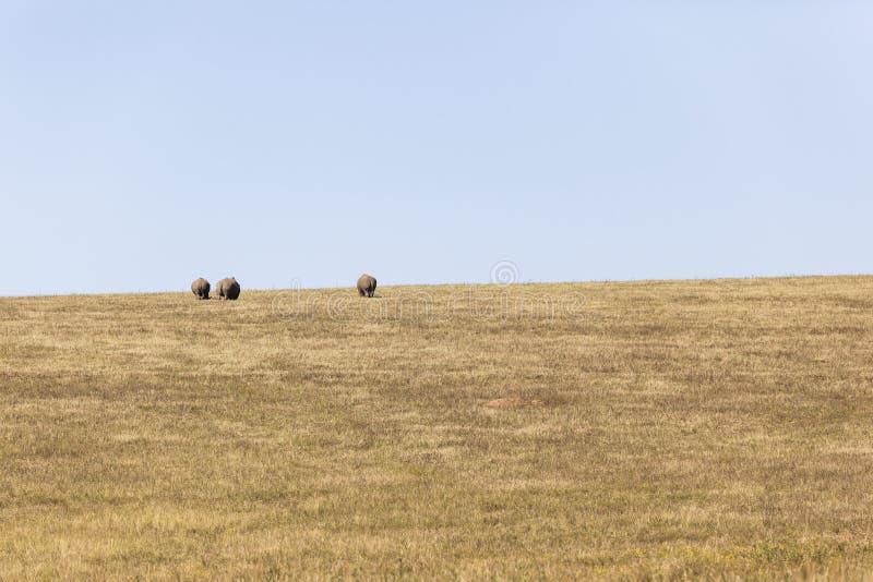 Rhino's Landscape stock photography