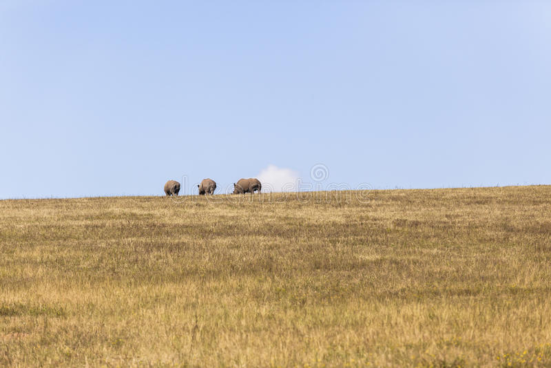 Rhino's Landscape royalty free stock photos