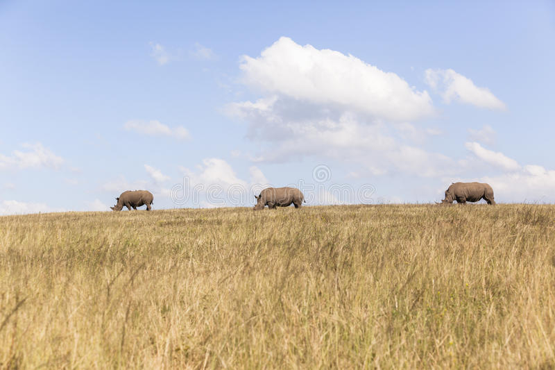 Rhino's Landscape stock images
