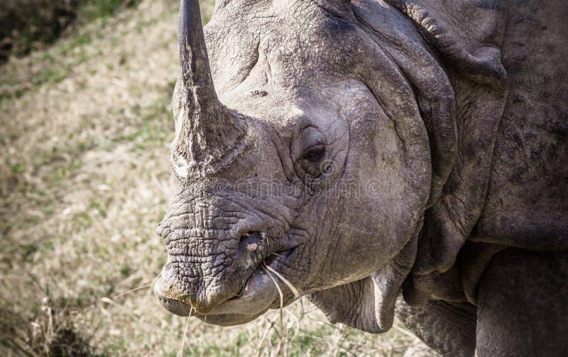 Rhinocéros à cornes de l'Indien un chez Chitwan royal images stock