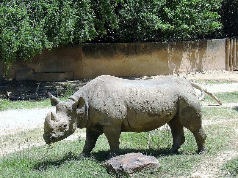 Rhinocéros au zoo images stock