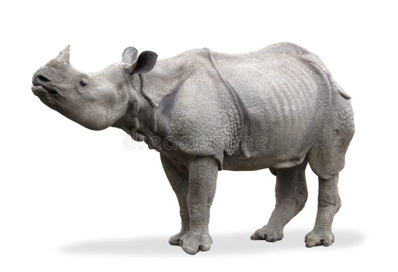 Download Rhinoceros Stock Photo - Image: 17730680