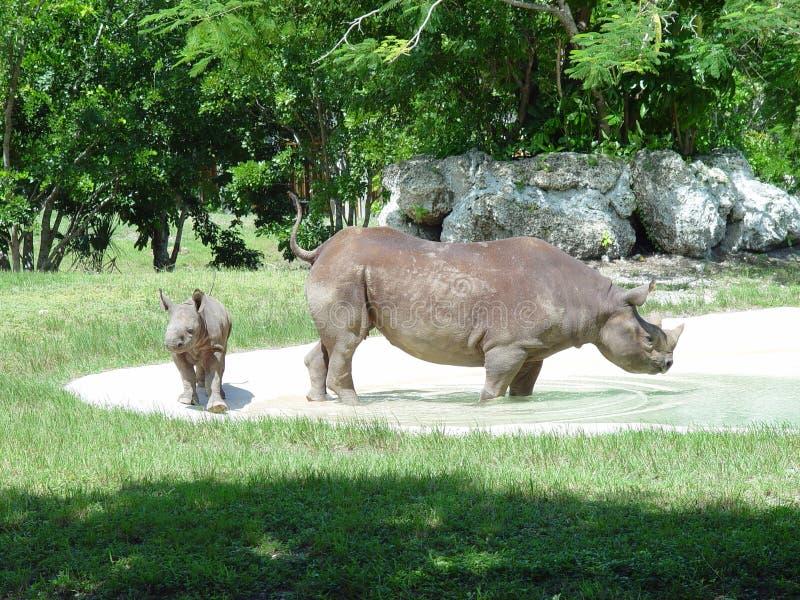 rhinoceros stockfotografie