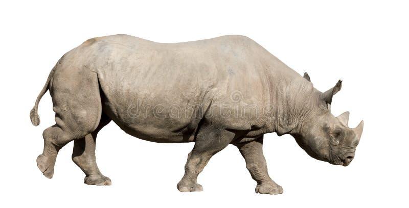 Download Rhinoceros стоковое изображение. изображение насчитывающей строения - 6855623