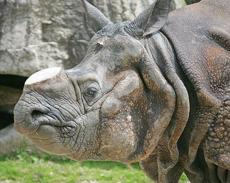 rhinoceros 7 стоковые фотографии rf