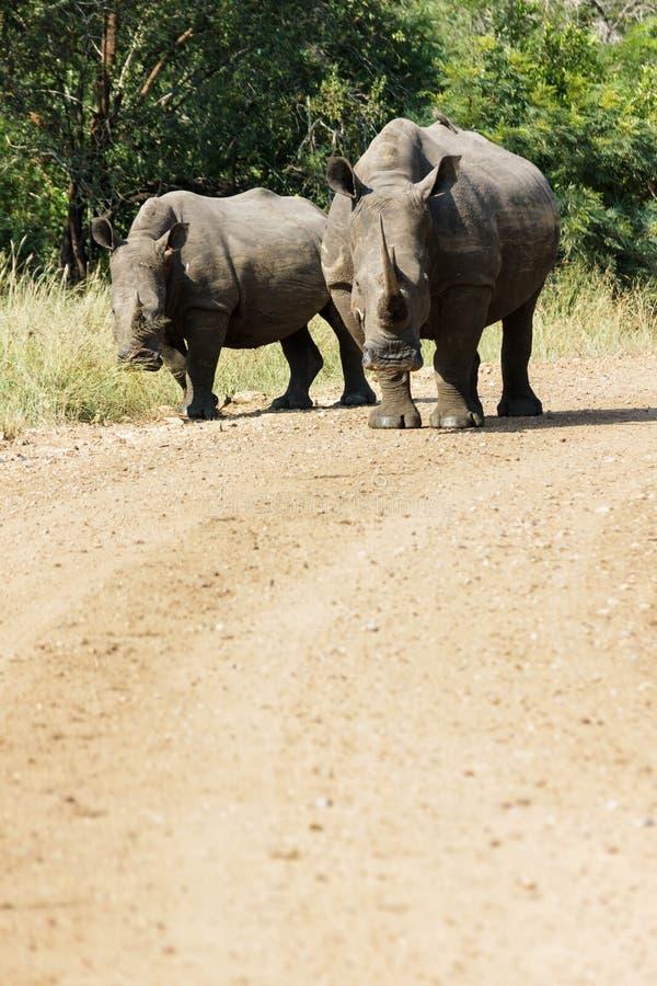 rhinoceros lizenzfreie stockbilder