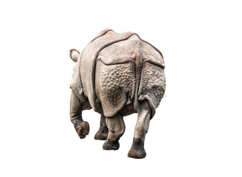 Rhinoceros back on white royalty free stock images
