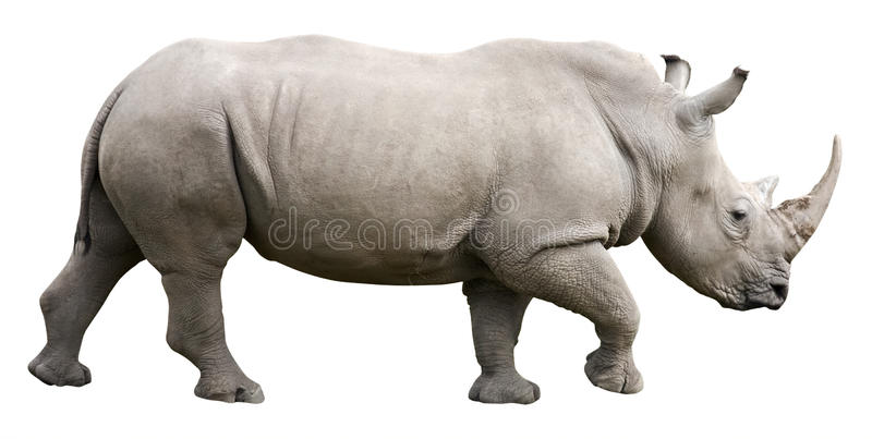 Download Rhinoceros With Clipping Path Stock Image - Image: 16173581