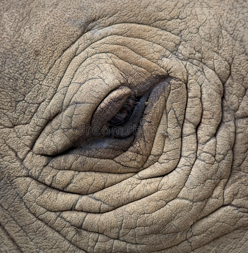 Rhinoceros Eyes. Detail of a eye great one-horned rhinoceros stock photography