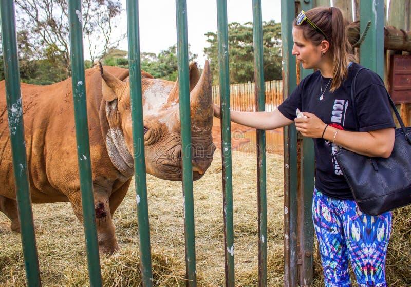 Rhinoceros hug royalty free stock photos