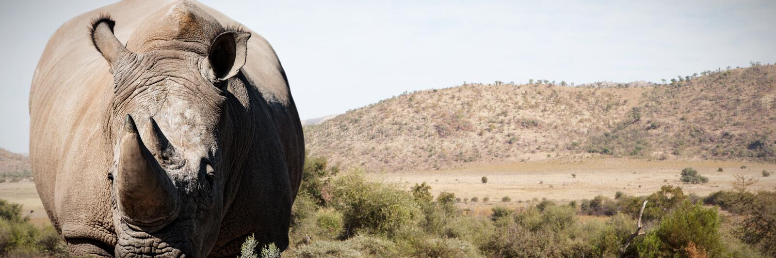 Composite image of rhinoceros standing on a dusty land stock images