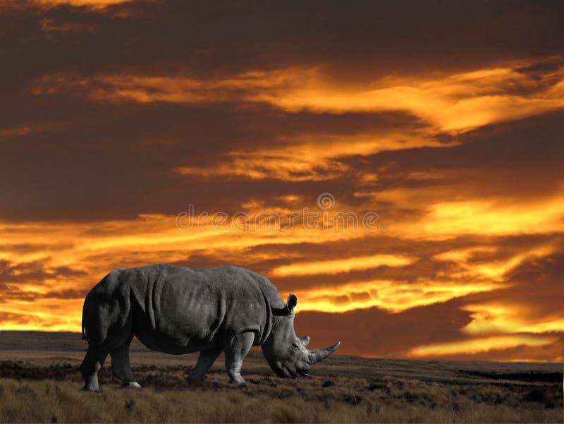 Rhinoseros met zonsonderganghemel royalty-vrije stock foto's