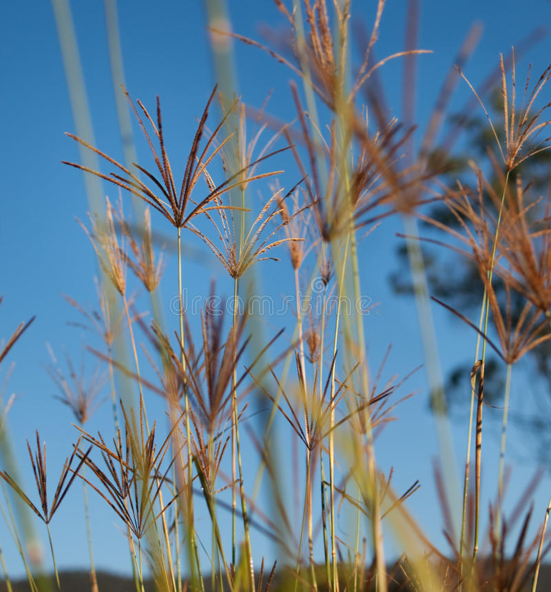 Rhodes grass against blue sky background stock photography
